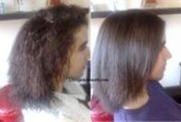Smooth-hair Paris 14