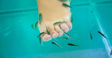 Fish Pedicure, un danger?