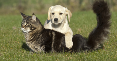 Camping, chiens et chats