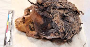 Des extensions retrouvées sur la tête d'une femme de l'Egypte antique
