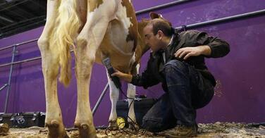 Qui est le coiffeur des vaches au salon de l'agriculture ?